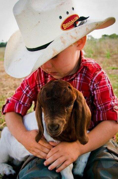 little cowboy & goat