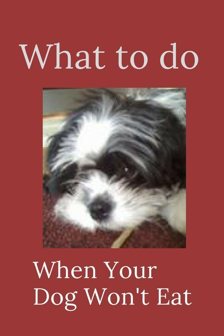 Appetite Stimulants For Dogs 7 Lifesaving Tips Dogs My Dog