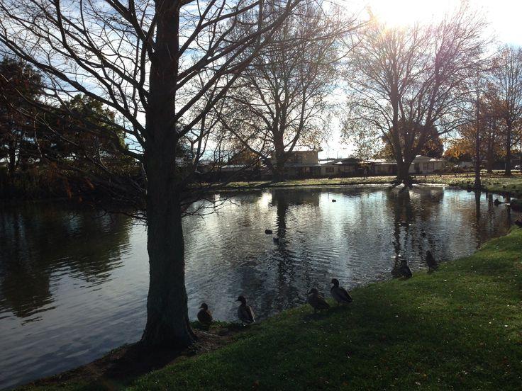 Winter approaching Anderson Park Napier NZ 2014