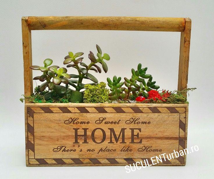 Box and Jade plant