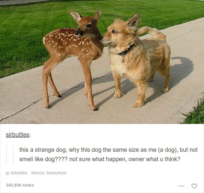 Best Dog Humor Ideas On Pinterest Funny Dog Humor Cute - 45 tumblr posts about animals that are impossible not to laugh at