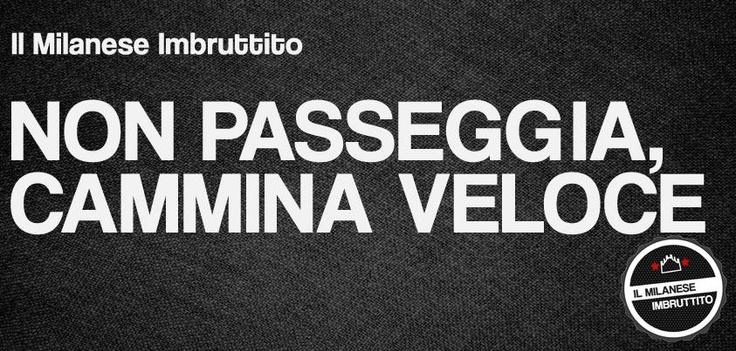 Perché è sempre un pò in sbatti, e non ha tempo da perdere. #AMilano #martedì #figaunpòdisole #zerovoglia Thanks Federico Papini