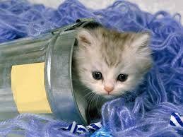 Resultado de imagen para fotos de gatitos tiernos