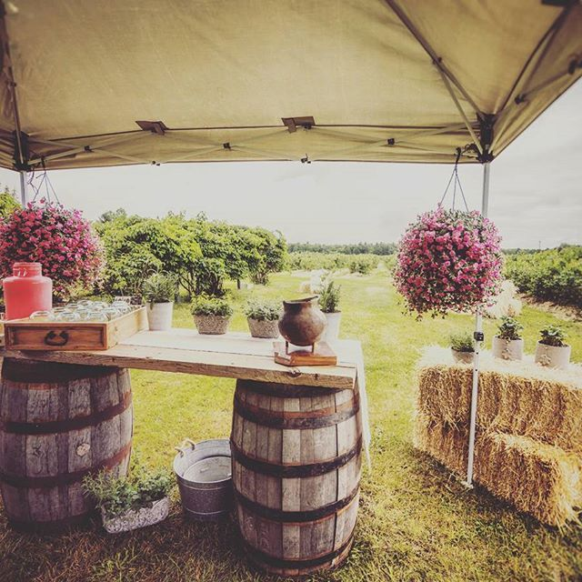 Our neutral barn board bar mixed with green & punches of pick has us ready for summer days in the berry fields. #barriehillfarmfeast #lishanskyphotography #eventdecor #barnboard #vintagerentals #rusticwedding #berrypicking #littleweepropshop