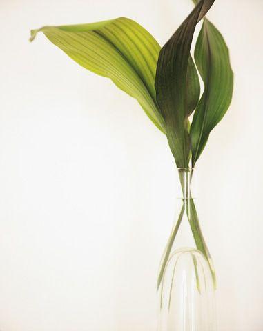 bloom16: Greenery Fil, Bloom Magazines, Green Harmony, Bl16 029 Jpg, Green Ti, Simple Green, Green Inspiration, Greener Life, Colors Green