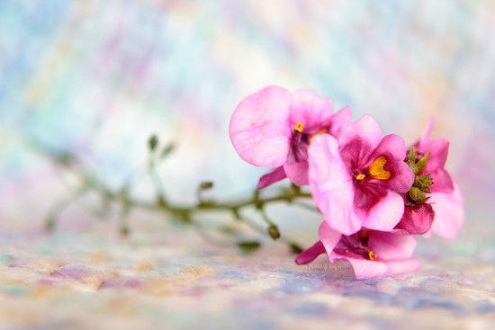 Tiny pink flowers (C) Deborah Ann Stott 2015