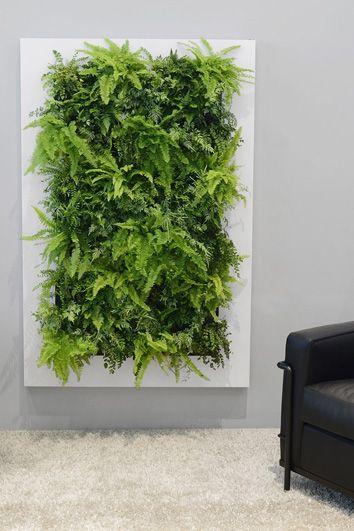 Groene muur – live picture – Artiplant creatieve kantoorplanten