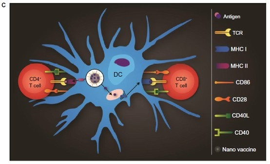 Figure 1 (A–C) Schematic overview of particle-based vaccines. (C) DCs process and present antigens delivered by particles to T cells by means of the major histocompatibility complex (MHC) class I or II pathways.