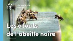Pierre Javaudin, apiculteur passionné, nous explique pourquoi l'abeille noire mérite d'être réintroduite en apiculture et dans nos jardins.