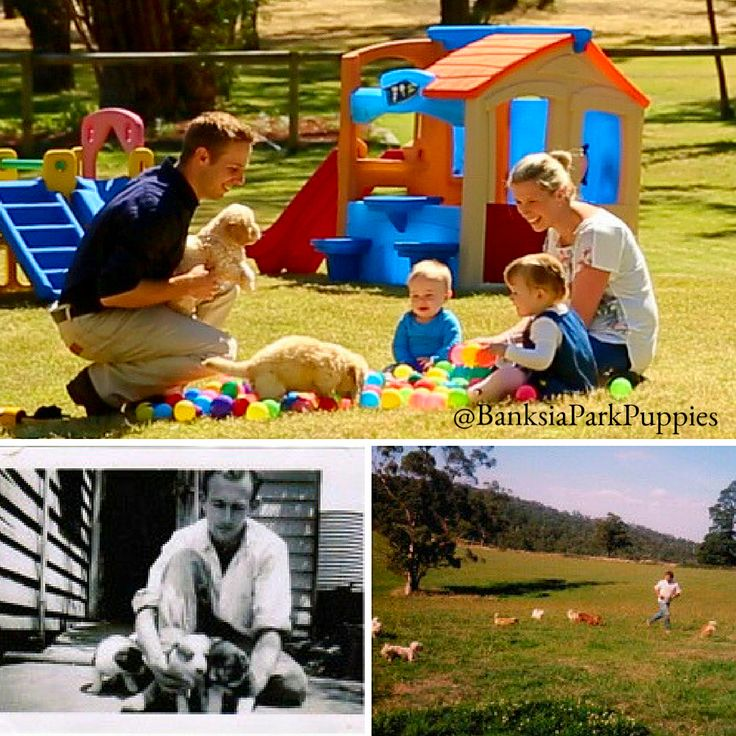Banksia Park Puppies is a family company with 3 generations of dog breeding experience! 🐶🐾🐕