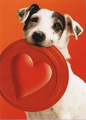 jack russell dog valentine day cards - Google Search