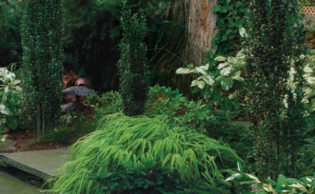 125 best images about conifers on pinterest gardens sun for Shade garden design zone 4