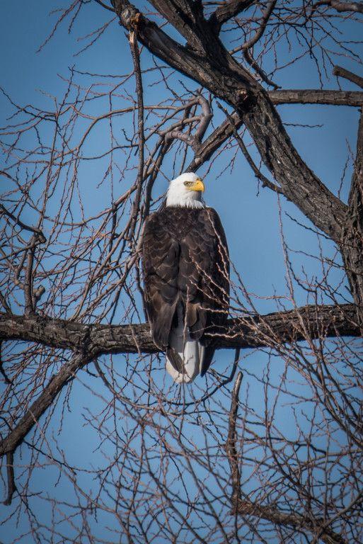 A Wildlife Weekend in Klamath Falls, Oregon