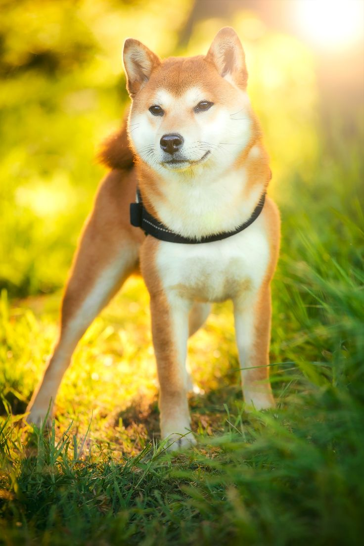 Hachiko - Hachiko is enjoying the magic lights out in Gallecs Nature park, discovering spring scents, birds, insects and more... Thanks to my 3 assistants for patiently and carefully handling him into the righ spot :-)