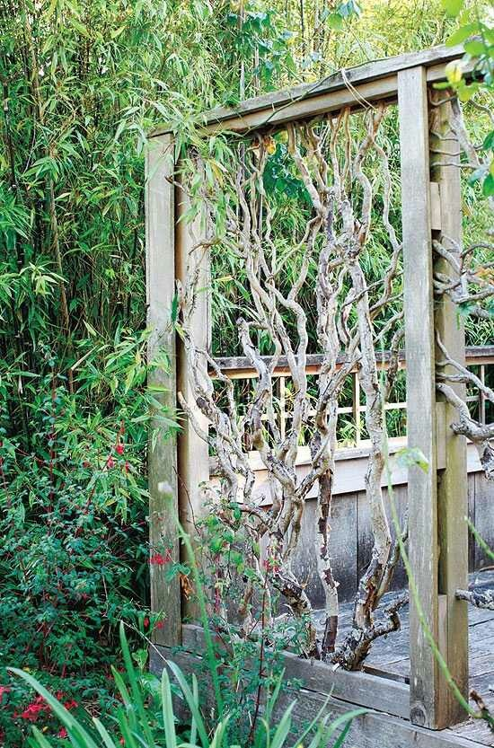 82 best images about garden ideas for privacy screen on for Best garden screening for privacy