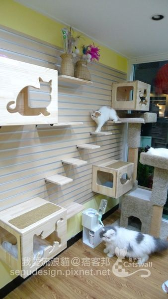 OMG such a cute cat room!