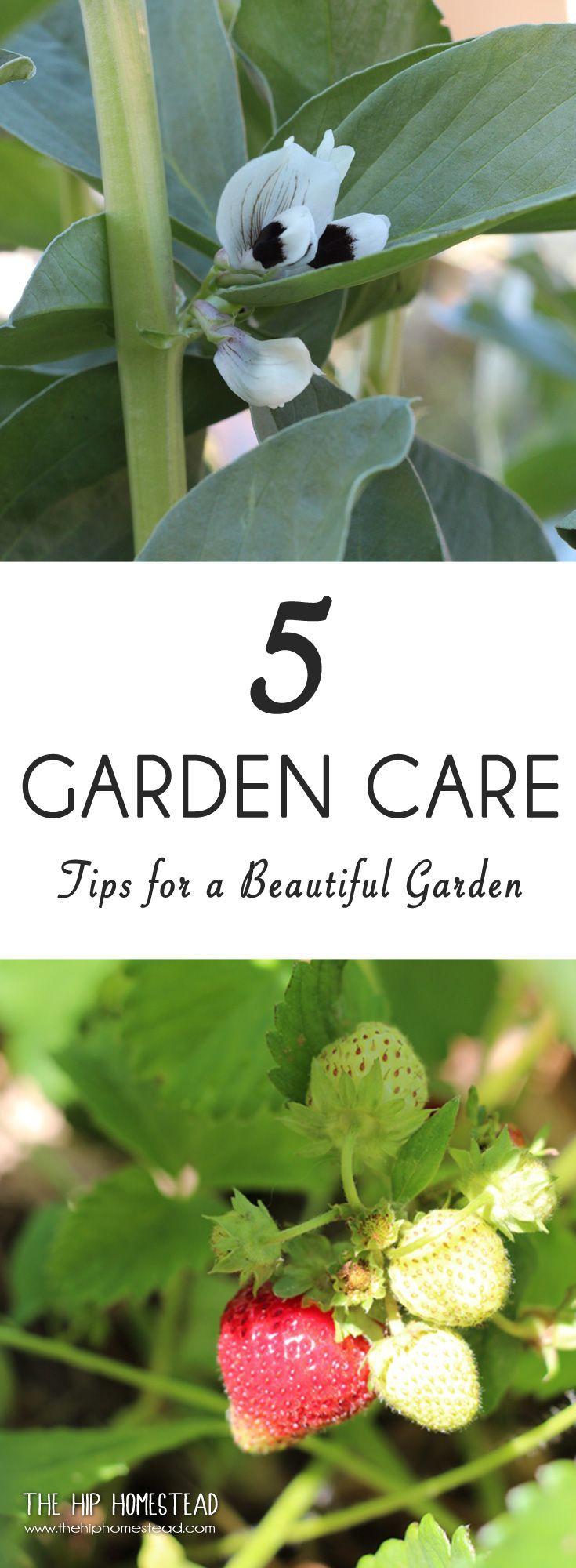 5 Gardening Care Tips