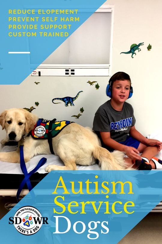 An Autism Service Dog can be a powerful tool in day to day life. SDWR trains Autism service dogs specifically for individual family needs. Tasks include preventing elopement, search and rescue, interrupting self-harm, providing comfort during over-stimulation, and constant companionship.