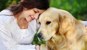 Un lío de perros: custodia compartida de mascotas - http://www.guiasdemujer.es/st/custodiacompartida/Un-lio-de-perros-custodia-compartida-de-mascotas-2128