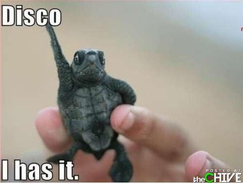 Funny caption gallery : theCHIVE  @Clay Tasha Stephens :] its another turtle!
