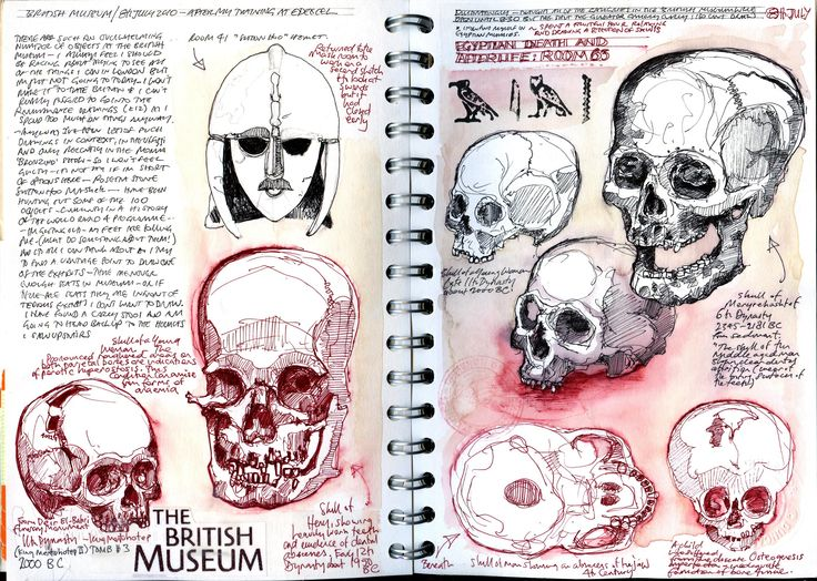 Drawing skulls in the British Museum.