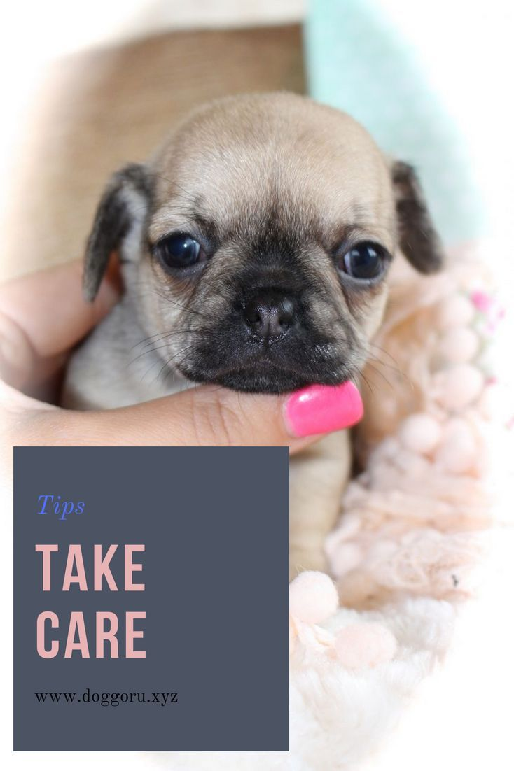 The Right Way To Take Care Of Newborn Puppies Baby Dogs Puppies