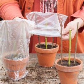 Stekken nemen in mei. Voorbeelden van planten die zo zijn te stekken zijn: floxen, rozen, Zeeuws knoopje, lavendel, rozemarijn, munt, salie en hortensia.