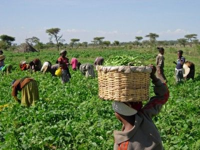 Experts canvass innovative farming to boost agro productivity:  Experts in the agricultural sector are canvassing for improved technology…