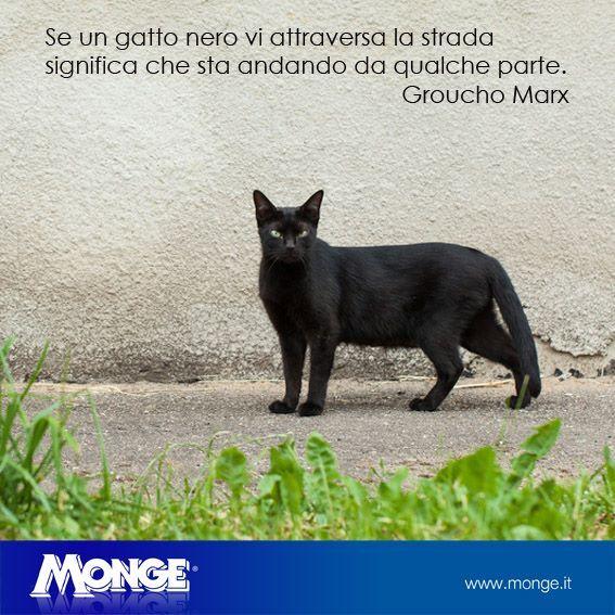 Se un gatto nero vi attraversa la strada significa che sta andando da qualche parte. Groucho Marx