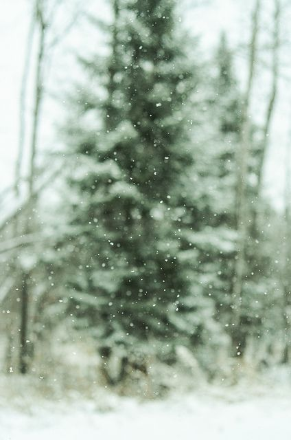 Winter *❄️~*.Wishes & Dreams.*~❄️* . . . softly falling snow in dreamlike landscapes