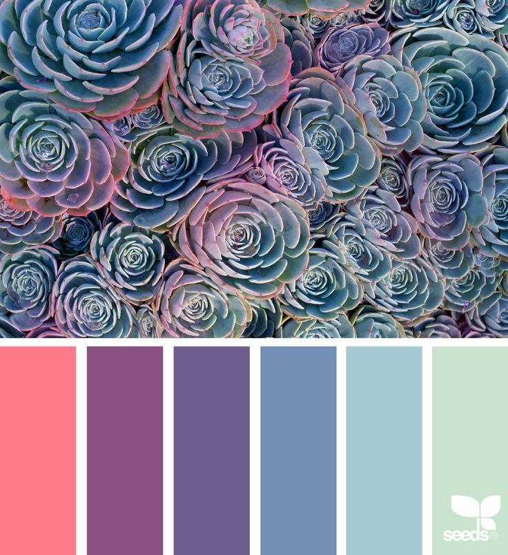 { succulent spectrum } image via: @traceylbolton