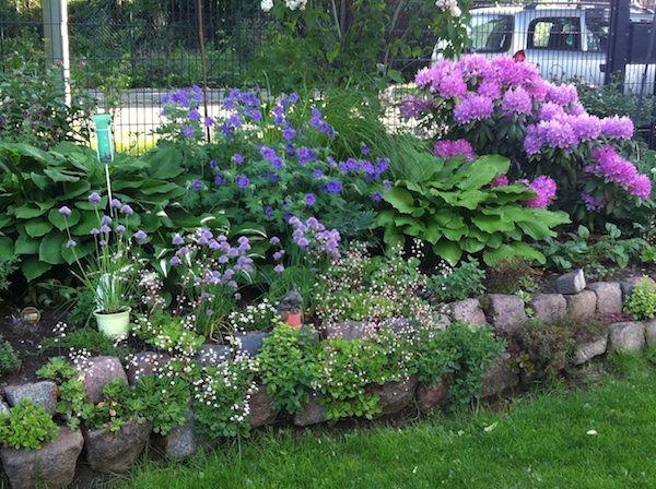Staudenbeet Rosa Tipps Fur Staudenbeet Im Halbschatten Seite 1 Gartengestaltung Garten Gartengestaltung Staudenbeet