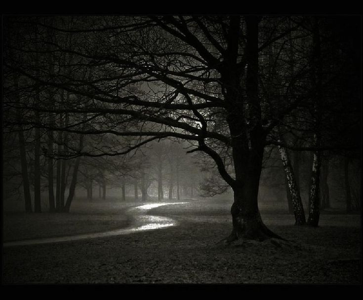 Image result for black and white eerie forest