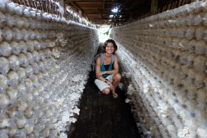 Authentic recipes with oyster mushrooms and a grow kit. Photo: Bo` on the road in a oyster mushroom farm, Thailand (source: my personnal food and travel blog / vlog with recipes, authentic video recipes, street food, food and travel documentary, travel info and more. Welcome! :) )