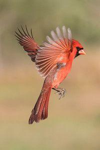 TX Workshop - Birds In Flight - earlorfphotos