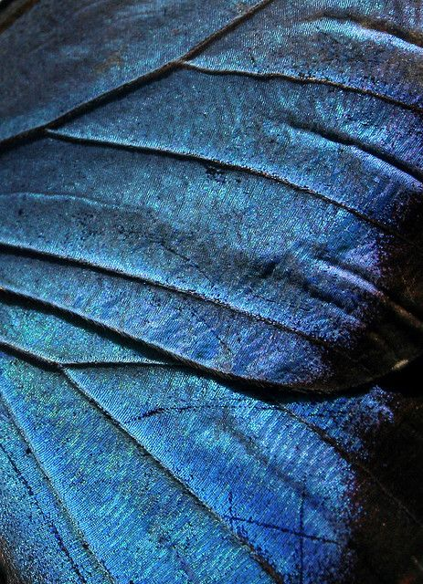 wing texture by opacity #patterns and #textures