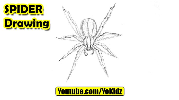 How to draw a Spider  Spider Drawing from YoKidz  #YoKidz #Drawing #PencilDrawing #Generaldrawing #Like4like #Likeforlike #Share4share #SHareforshare #Draw #DrawSpider #Blackandwhite #Spider
