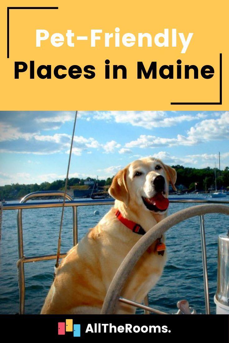 Pet Friendly Maine Our Favorite Locations Pet Travel Dog Friendly Hotels Pets