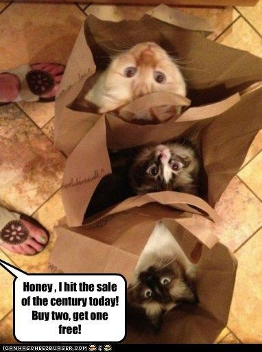 Dear Pammy, I wanted a purebred cat!