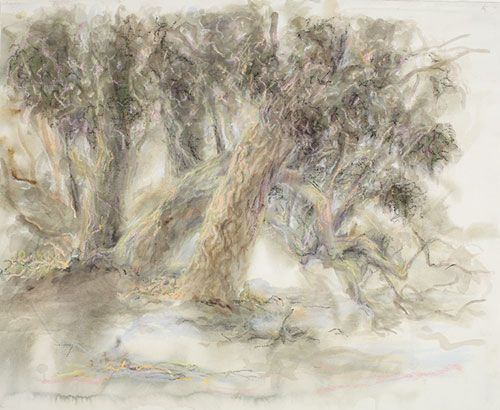 Janet Dawson - 'Big Trees on Syke's Flat' 1998 - 2013, watercolour, pastel & charcoal on paper, 52 x 67 cm, POA