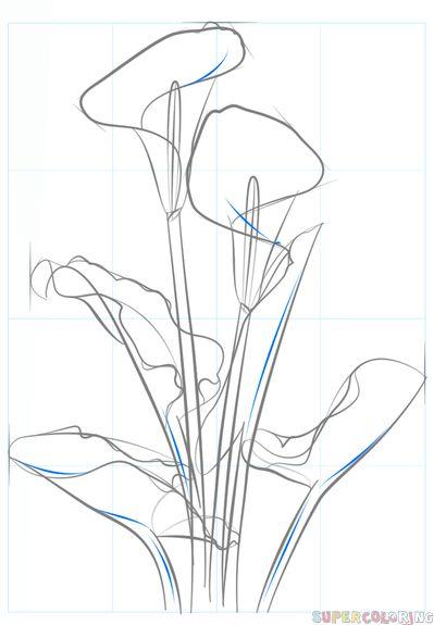 Best 25+ Flower drawing tutorials ideas on Pinterest