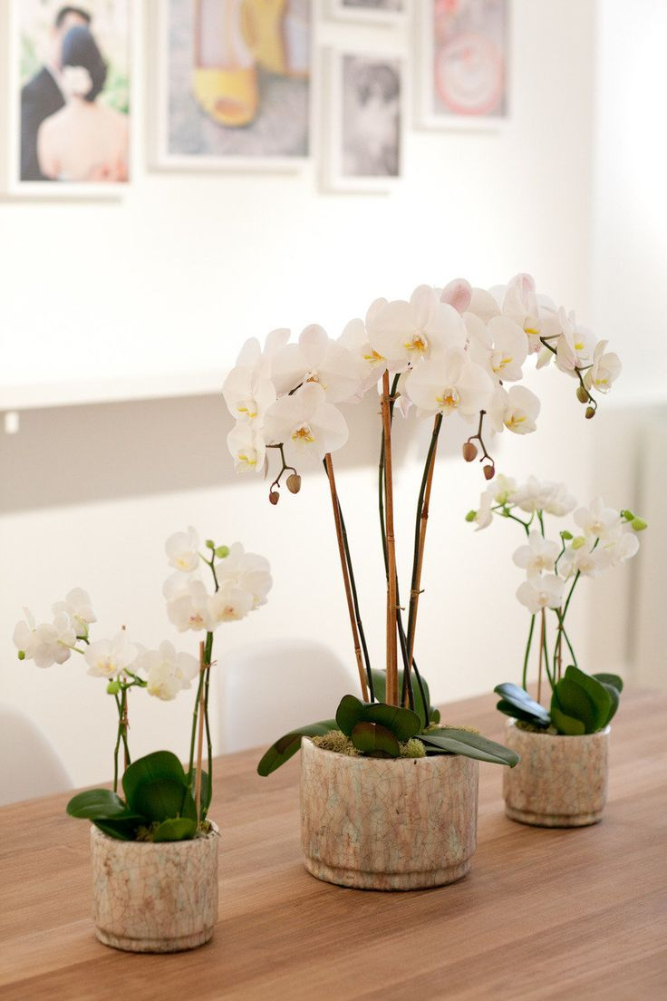 81 best orchid arrangements images on Pinterest | Floral ...