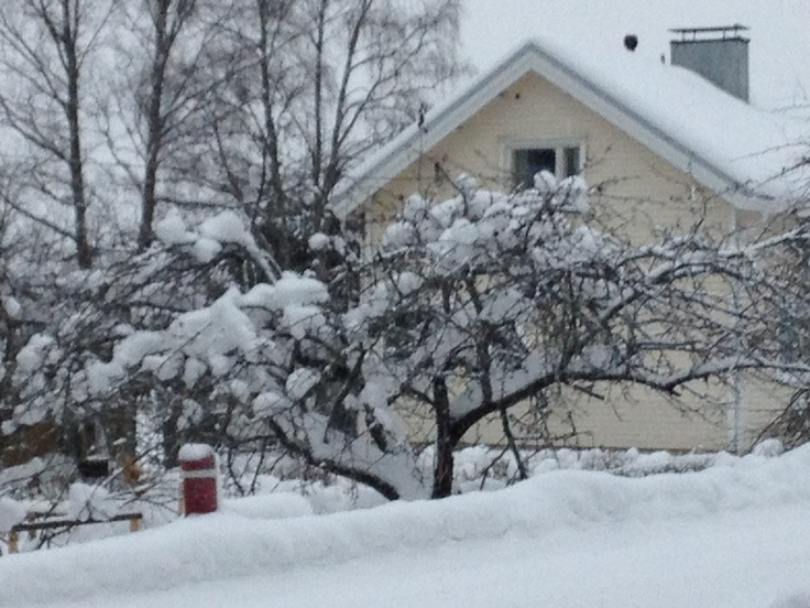 Apple tree covered by snow