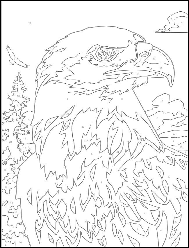 Welcome to dover publications wildlife color by number