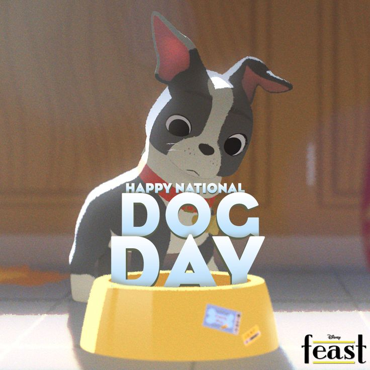 Happy National Dog Day! Celebrate with us as USA TODAY introduces you to Winston, the star of our upcoming short, Feast: http://di.sn/sjG