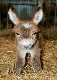 Image result for baby donkey