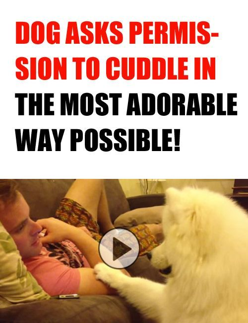 I Want To Cuddle With You Baby: Dog Asks Permission To Cuddle In The Most Adorable Way
