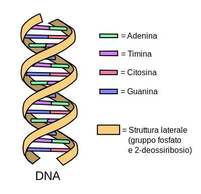 Il mio Blog Olistico: Nei nostri geni un potenziale quasi inesplorato