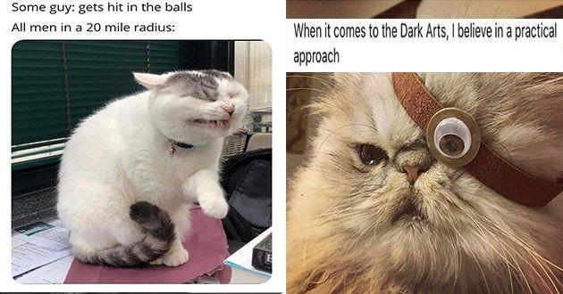 Top 20 Memes Of The Week Cheezburger Users Edition 40 Cat Memes Cats Funny Cat Memes