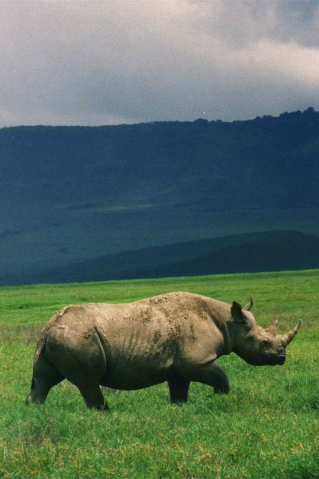 Help save threatened African rhinos + win a dream vacation: http://www.everintransit.com/help-save-rhinos/ #conservation #JustOneRhino